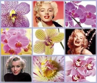 collage libero con bellissimi fiori per aggiungere tre delle vostre foto