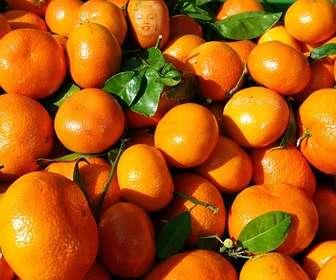 Gioco educativo in cui devi trovare un volto in un arancio e di imparare a mangiare sano.