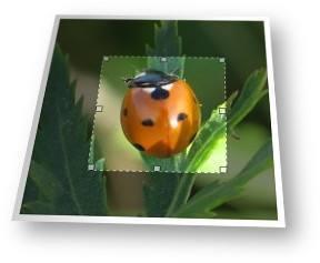 strumento online per foto e ritagliare le immagini.