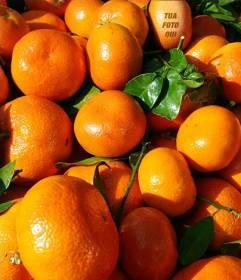 Gioco educativo in cui devi trovare un volto in un arancio e di imparare a mangiare sano