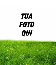 Cornice per erba verde nella tua foto