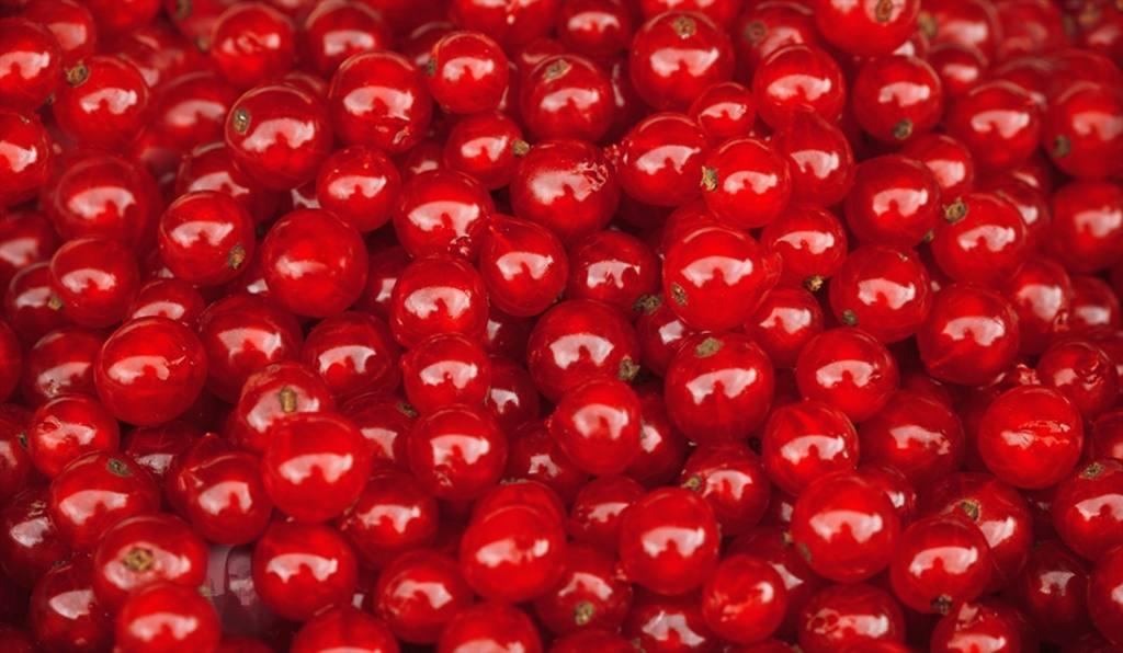 Impostare un ciliegie rosse per trovare la tua foto